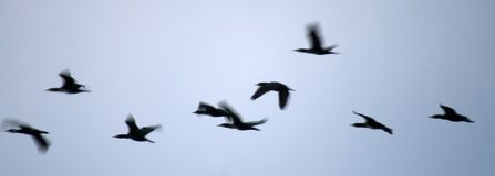 ноча птиц Стоковые Фотографии RF