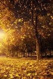 ноча пущи Стоковое Изображение RF