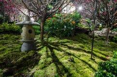Ноча Сакура Стоковое Изображение