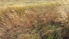 ноча травы поля дня Стоковые Фото
