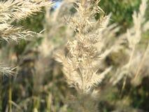 ноча травы поля дня Стоковое Фото