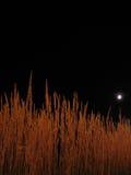 ноча травы Стоковое Изображение