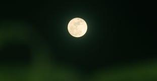 Ноча лунного света и тень ` s дерева Стоковое Изображение RF