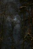 ноча Стоковое фото RF