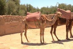 ноча marrakech fna el djeema Стоковое Изображение RF