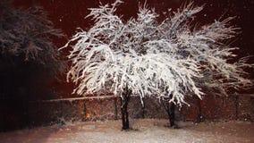 Ноча Snowy Стоковые Фотографии RF