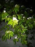 Ноча Snowy Leavy Стоковое Изображение