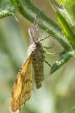 Ночная муха Стоковая Фотография