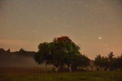 Ночное небо в моей задворк Стоковая Фотография RF