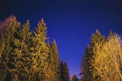 Ночное небо, звезды и деревья стоковая фотография rf