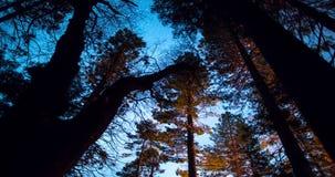 Ночное небо над Treetops леса акции видеоматериалы