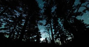 Ночное небо над Treetops леса сток-видео