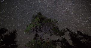 Ночное небо над Treetops видеоматериал