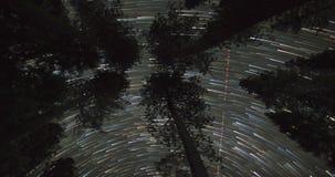 Ночное небо над Treetops сток-видео