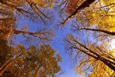 Ночное небо осени Стоковое Изображение RF