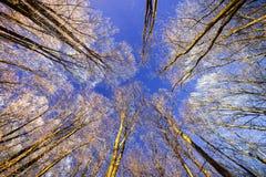 Ночное небо с звездами в ноче зимы с деревьями Стоковые Изображения RF