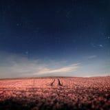 Ночное небо с звездами над полем с трассировками стоковая фотография