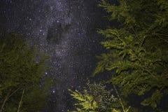 Ночь в лесе стоковые изображения