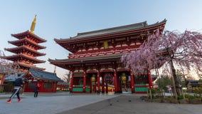 Ночь к промежутку времени дня виска Sensoji с вишневым цветом в утре, Токио весны, Японией сток-видео