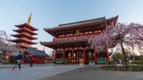 Ночь к промежутку времени дня виска Sensoji с вишневым цветом в утре, Токио весны, Японией видеоматериал