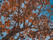 Ноябрь выходит в Солнце стоковые фото