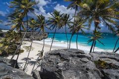 дно залива Барбадосских островов Стоковые Изображения