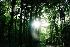 Но солнце светит хорошо через деревья стоковое фото