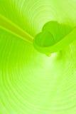 нутряные листья Стоковые Фотографии RF