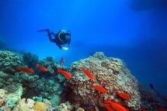 Нырять в Красном Море Стоковые Изображения RF