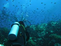 Нырять в океане Акваланг силуэта водолаза Стоковое Изображение