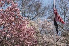НЬЮ-ЙОРК, США - 14-ОЕ АПРЕЛЯ 2018: Американский флаг в зацветать весной парк стоковая фотография rf