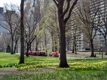 Нью-Йорк, Central Park весной, NYC, NY, США Стоковые Фотографии RF