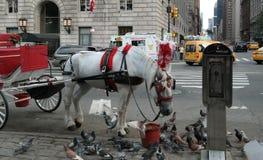 Нью-Йорк, NY, США 05 28 2016 красное и белый экипаж при лошадь экипажа деля еду с птицами Стоковая Фотография RF