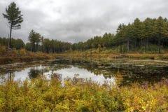 Нью-Хэмпширский болото Стоковая Фотография