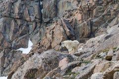няня горы малыша козочки стоковое изображение