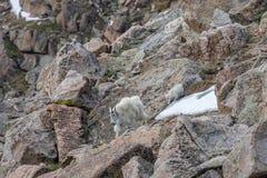 Няня и дети козы горы в валунах стоковая фотография