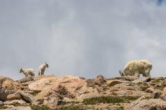 Няня и дети козы горы на Ридже стоковые фотографии rf