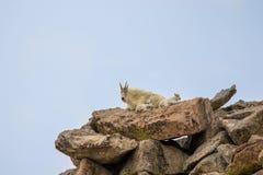 Няня и дети козы горы на утесе стоковая фотография rf