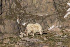 Няня и дети козы горы стоковые изображения rf