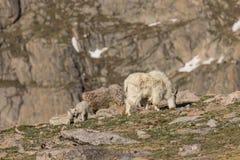 Няня и дети козы горы стоковое фото rf