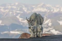 Няня и дети козы горы стоковое изображение rf