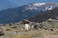 Няня и дети козы горы стоковые фотографии rf