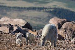 Няня и дети козы горы стоковая фотография