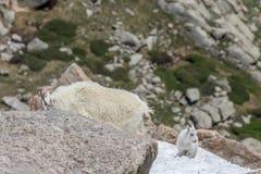 Няня и ребенк козы горы в снеге стоковое изображение