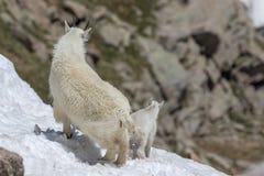 Няня и ребенк козы горы в снеге стоковое фото