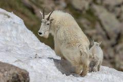 Няня и ребенк козы горы в снеге стоковое изображение rf