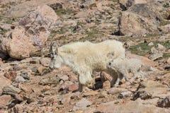 Няня и ребенк козы горы в утесах стоковая фотография