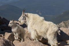 Няня и ребенк козы горы на утесе стоковая фотография rf