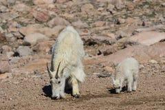 Няня и ребенк козы горы пася стоковая фотография