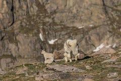 Няня козы горы и ее дети стоковое изображение rf